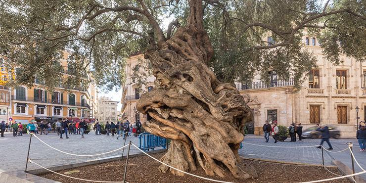 """Die sieben Wahrzeichen von Palma de Mallorca (3/7): Rathausplatz """"Plaza Cort"""""""